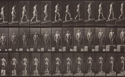 animal locomotion - E.Muybridge