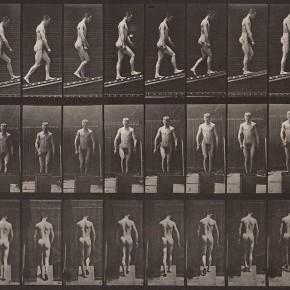 animal locomotion - E.Muybridge